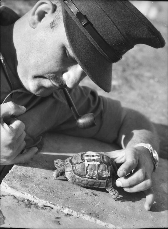 Австралийский офицер с черепахой-талисманом воинской части