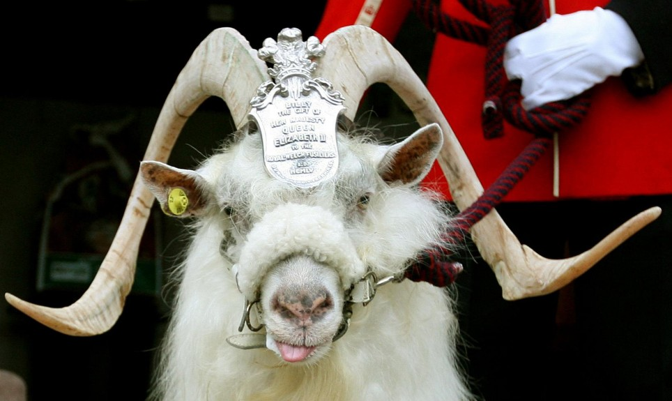 Regimental goat retires