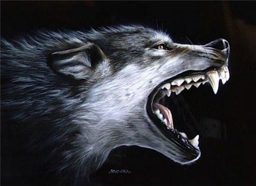 obraz-volka