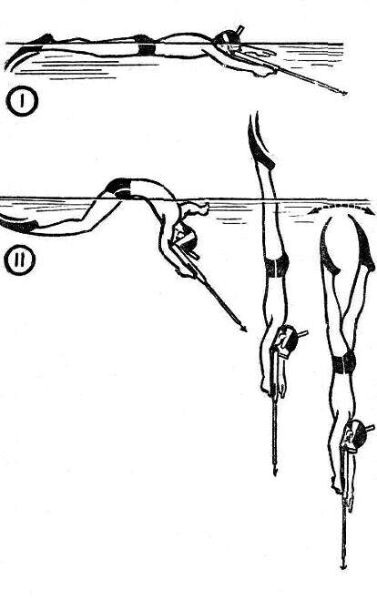 Как правильно нырять при подводной охоте
