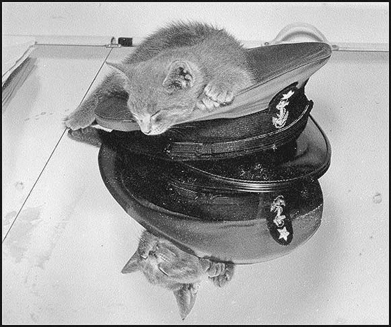 Морские коты