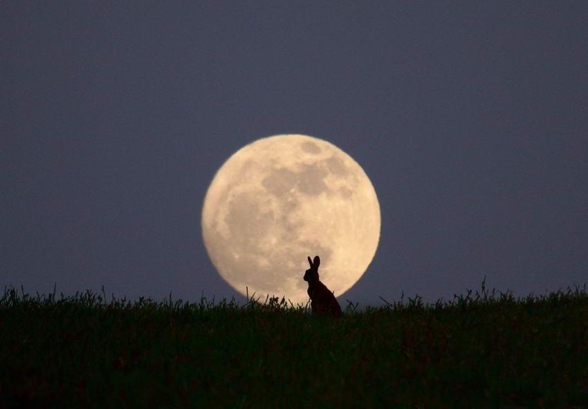 Ночная фото охота