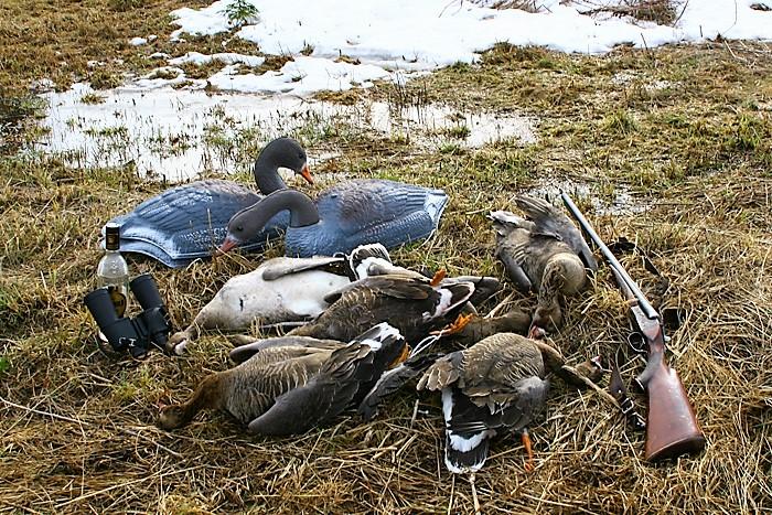 Особенности осенней охоты на гуся