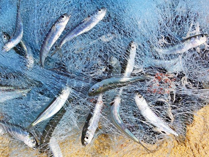 Рыбная ловля на живца
