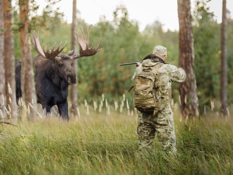 Некоторые виды охоты на лося